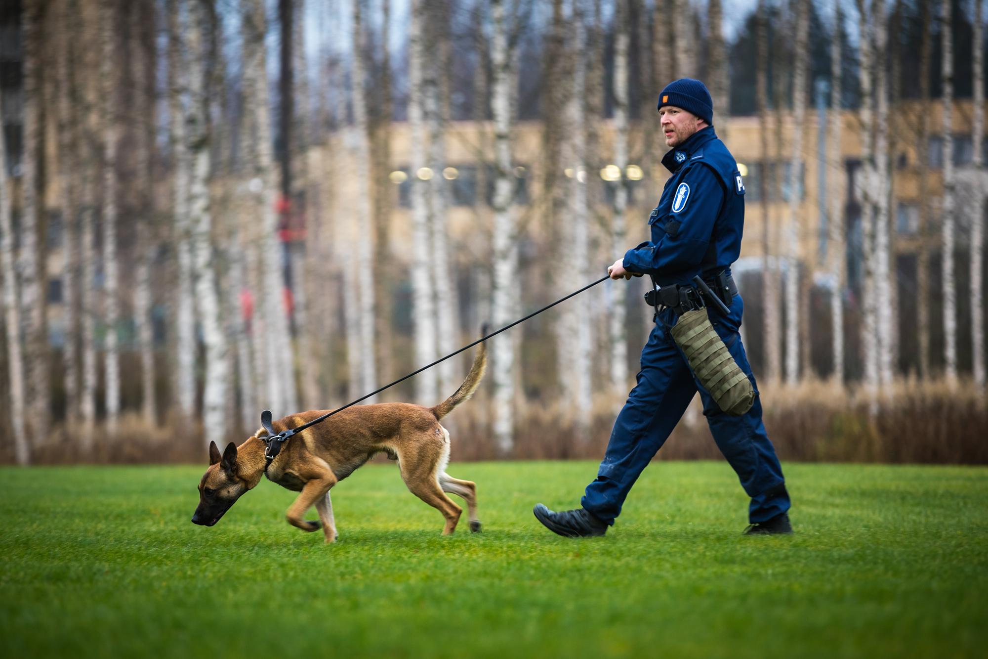 Suomen Yleisimmät Koirarodut
